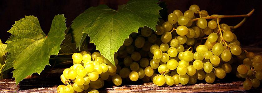 Как сделать зимнее укрытие для винограда