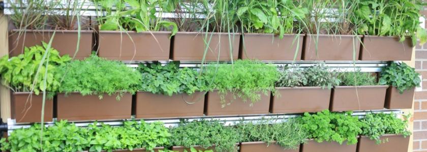 Огород в коробке