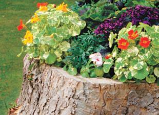 Декорируем старые пни в саду