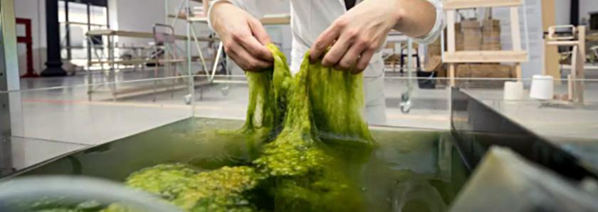 Биопластик из водорослей – с заботой об экологии