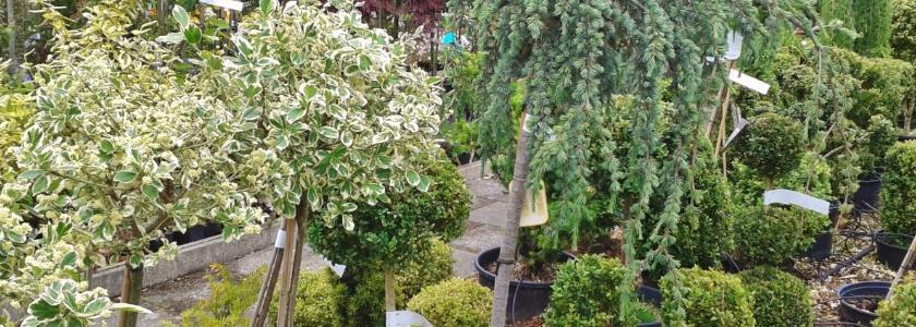 Скромное украшение летнего сада