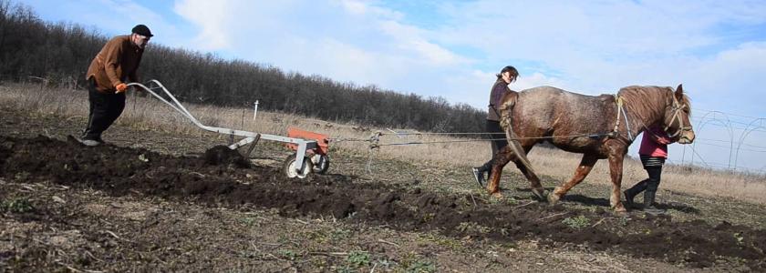Механизируем дачный труд: садовая техника