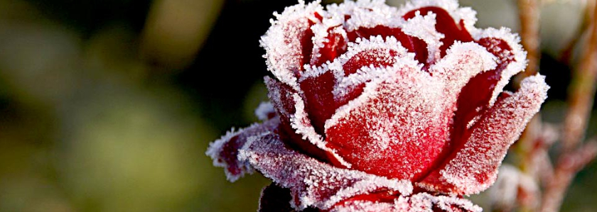 Участок и зима: тест на совместимость.