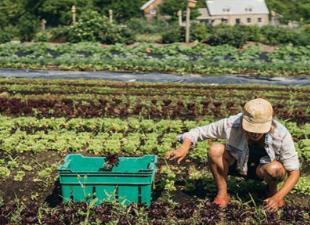 Умное земледелие на даче: думать, а не пахать