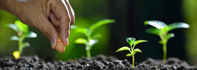 Мифы и правда о семенах