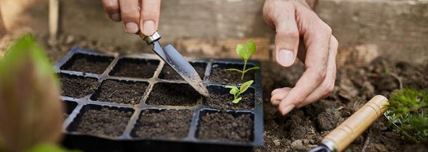 Как выбрать лучшие семена для посевной 2019 года