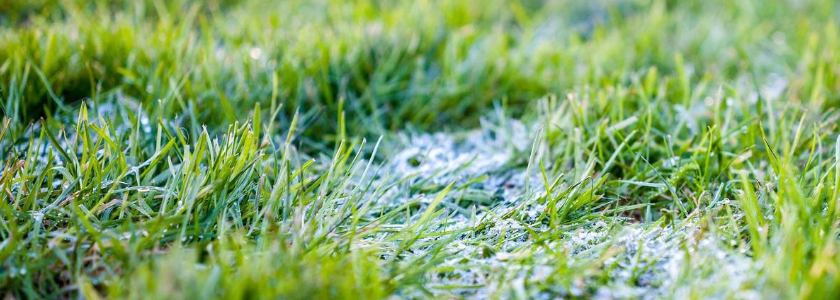 Что делать с газоном после схода снега. Список обязательных и дополнительных мероприятий