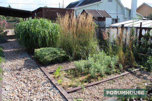 Фото посадки редких декоративных трав в мини-питомнике