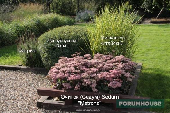 Фото с обозначением растений