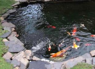 Водоём на своем участке: бассейны, пруды, биоплато, разведение рыбы