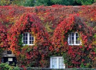 5 самых красивых и необычных фасадов пользователей FORUMHOUSE