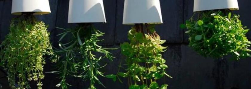 Кверху корнями: необычные горшки для цветов и овощей