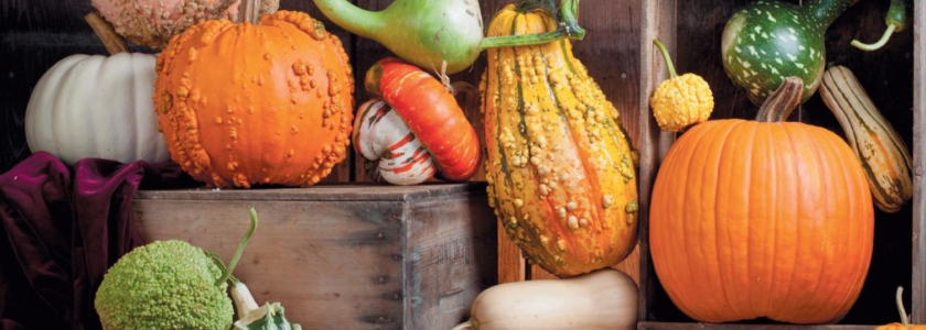 Как сохранить арбуз до Рождества, помидоры – до весны, а картошку молодой до нового урожая.