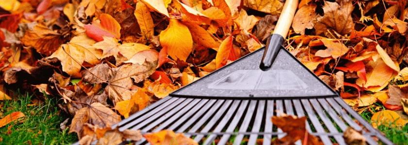 Опавшие листья на даче: лучшие варианты использования природного материала
