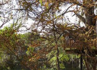 Жилой дом на дереве: особенности планирования и строительства