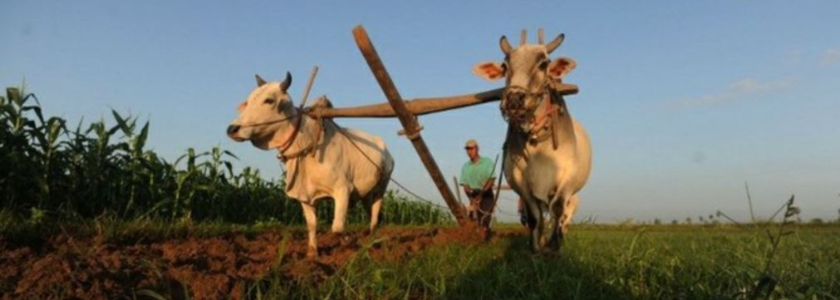 Расширение патентной системы на животноводство и растениеводство: чего теперь ждать ЛПХ