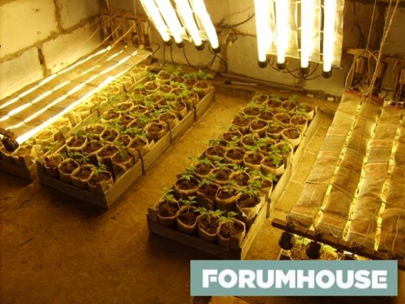Как выбрать фитолампу для растений