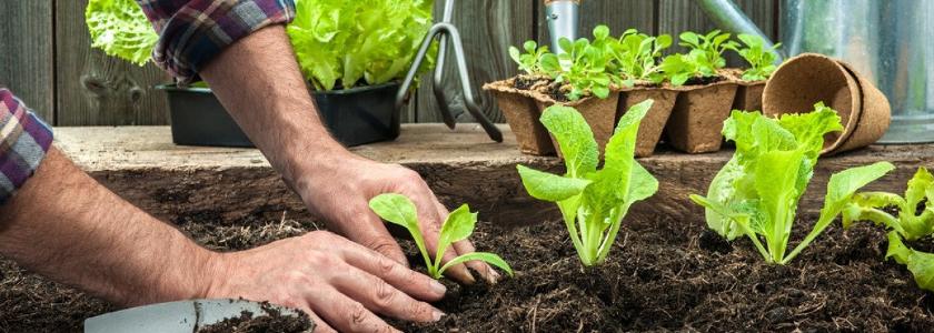 Патент для огородников: правда или вымысел?