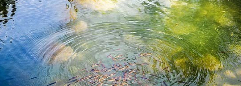 В Госдуму внесен законопроект о разделе участков с прудами