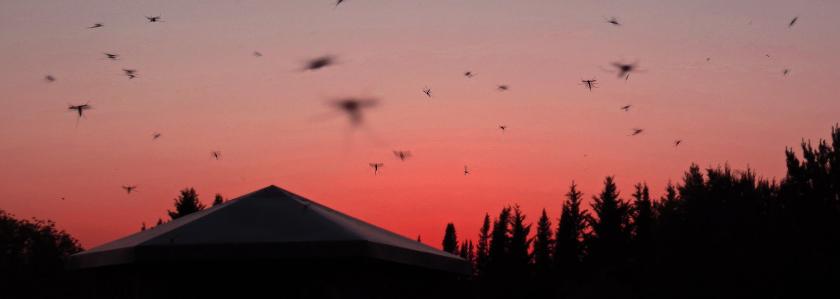 Как избавиться от комаров на дачном участке: ищем беспроигрышный вариант