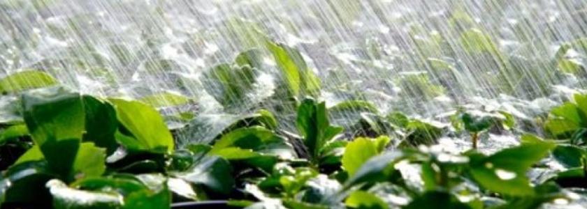 Урожайный огород в экстремальное лето