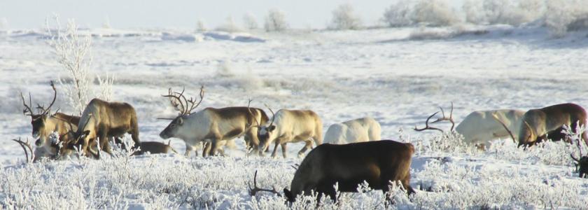 Дом в Арктике можно получить уже следующим летом